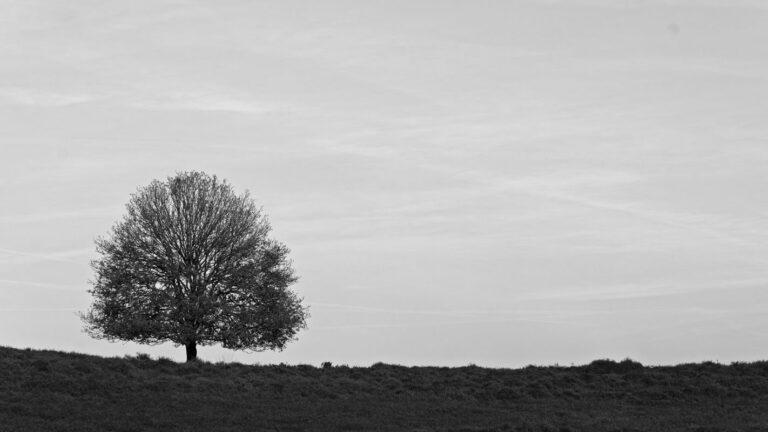 Eenzame boom op de hei op de postbank