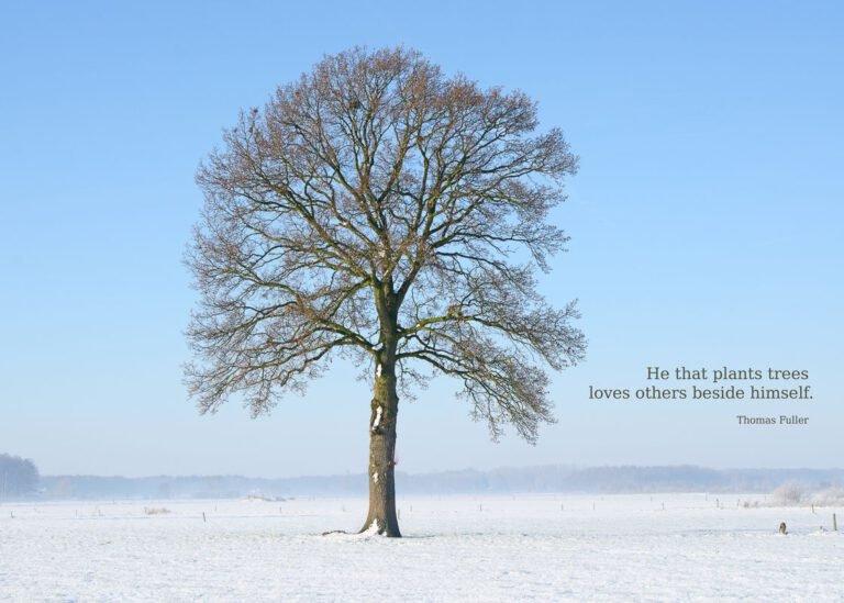 Een boom in de sneeuw