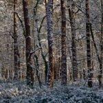 Sneeuw op de bomen in het bos