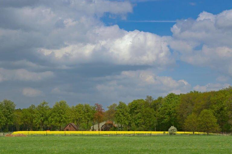 Coulissenlandschap bij Zutphen met koolzaad
