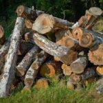 Slordige stapel omgekapte bomen, vnl berken