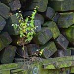 Een berkenboompje groeit op een wagon met bielzen.