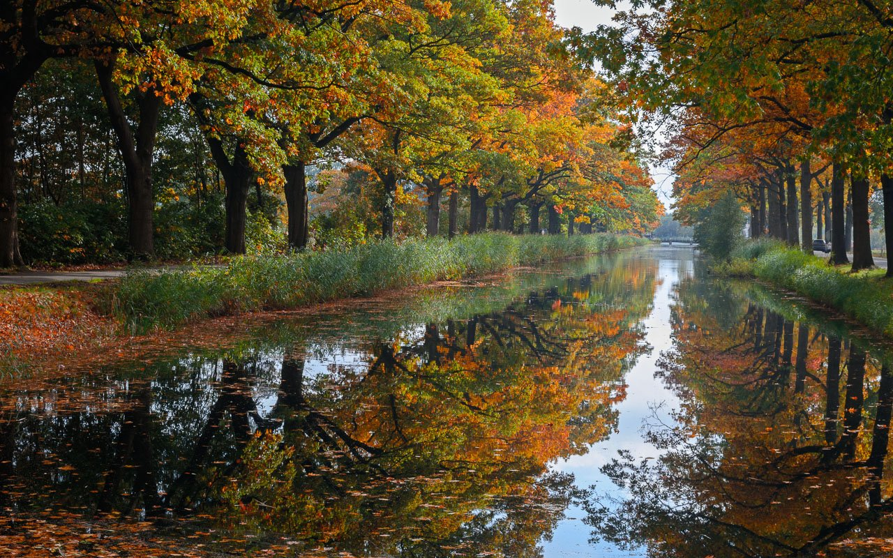 Herfstkleuren in deze bomenrij langs het kanaal