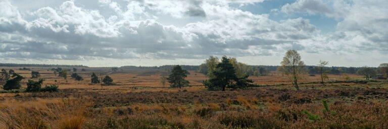 De heide bij Hoog Buurlo in de herfstzon