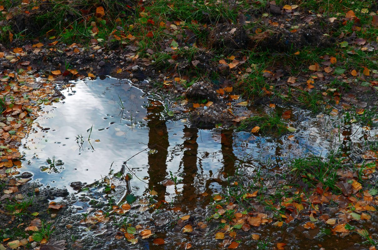 Een natte herfst: plas water in het bos