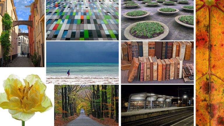 Collage van de beste foto's van 2013