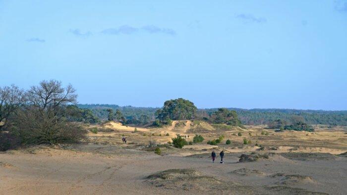 Woestijn in Nederland: wandelaars op het uitgestrekte Kootwijkerzand