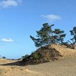 Zandheuvel met den op het Kootwijkerzand.