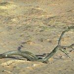 Een dode tak in het zand van het Kootwijkerzand.