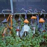 Verwaarloosde fietsen op de Uithof van studenten