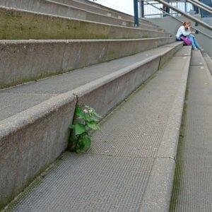 Urban flora - zwarte nachtschade op trappen station