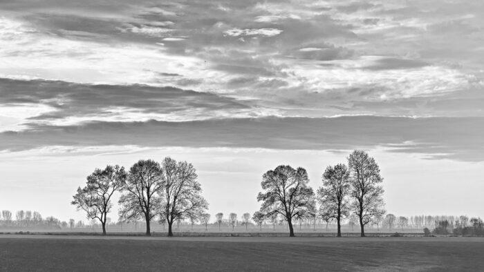 Silhouet van bomen in de herfst