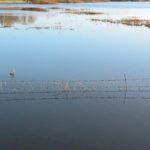 Prikkeldraad in een overstroomde uiterwaarde van de IJssel