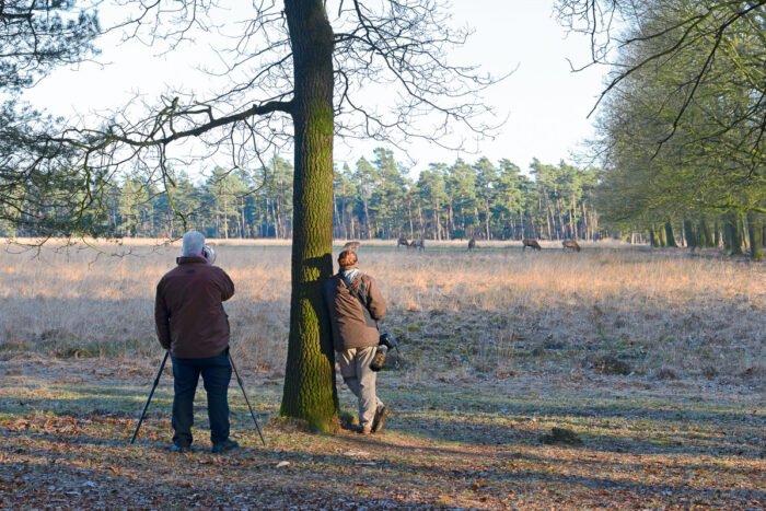 Wildlifefotografie op de hoge veluwe vanaf de kant van de weg