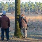 Wildlifefotografie made easy op de hoge veluwe vanaf de kant van de weg