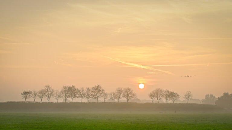 Kale bomen op de IJsseldijk bij Terwolde