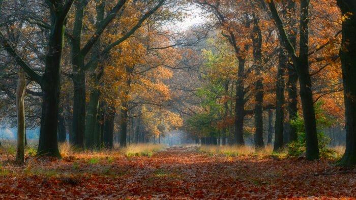Een dromerig pad met bomen en veel bladeren op de Hoge Veluwe