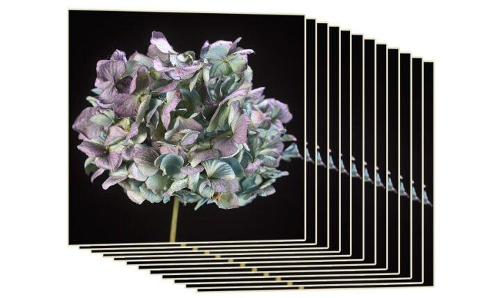 Een stack foto's met verschillende scherpte voor focus stacking