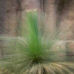 Pol gras in de desert van Burgers Zoo