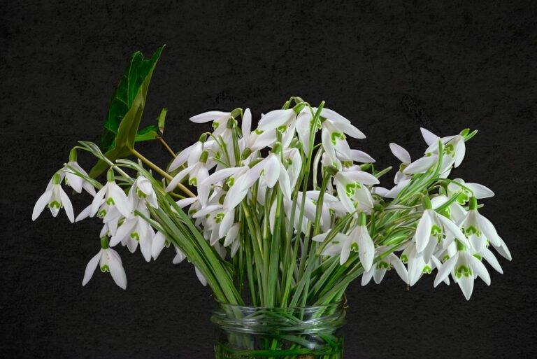 Voorjaarsgevoel - een bos sneeuwklokjes in een vaas