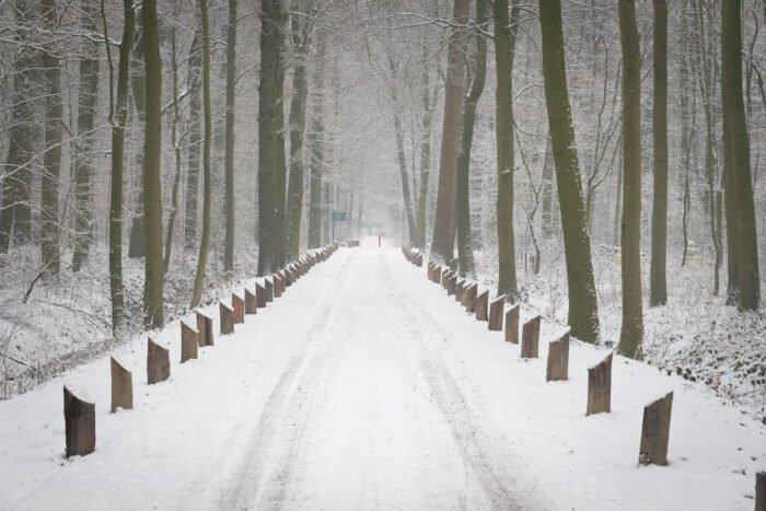 Laantje in de sneeuw op landgoed Amelisweerd