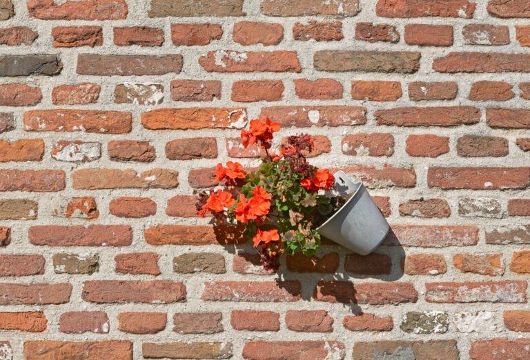 Pot met geraniums tegen een oude muur in Elburg