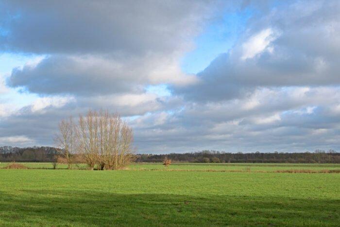 Januari licht in een weiland bij landgoed Leusveld